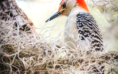 How to Keep Woodpeckers at Bay