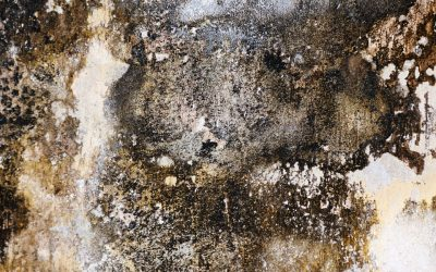 How To Win The Fight Against Mold